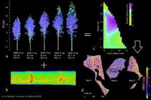 Laserkeilaussensorilla saadut tarkat runko- ja oksaisuustiedot auttavat kartoittamaan puiden ominaisuuksia.
