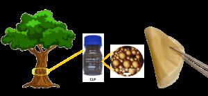 Vahvan, joustavan ja monitoimisen biokomposiitin valmistaminen